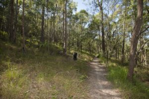 Bike path at Toohey Forest
