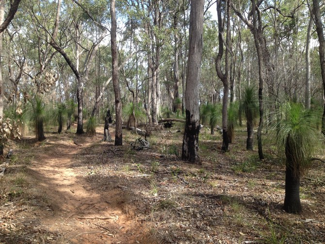 Bike path Toohey Forest