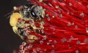 Stingless Bees in Tarragindi